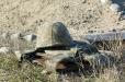 Համացանցում հրապարակվել է զոհված Սմբատ Գաբրիելյանի լուսանկարը