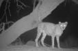 Տեսախցիկը ֆիքսել է աշխարհի ամենաանորսալի կատվին (լուսանկարներ)