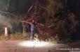 Ջերմուկում ծառը կոտրվել եւ ընկել է ճանապարհին