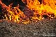 Արզականի անտառպետության մոտակայքում հրդեհ է բռնկել, այրվել է մոտ 20 հա բուսածածկույթ, որից շուրջ 1 հա անտառպետության տարածքից